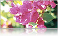 Orchids... beautiful encounters on a Priness Cruise Bahamas Style