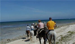 Things to do in Aruba - horseback riding
