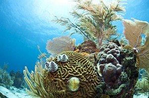 Cool Caribbean Fact - Caribbean Reefs